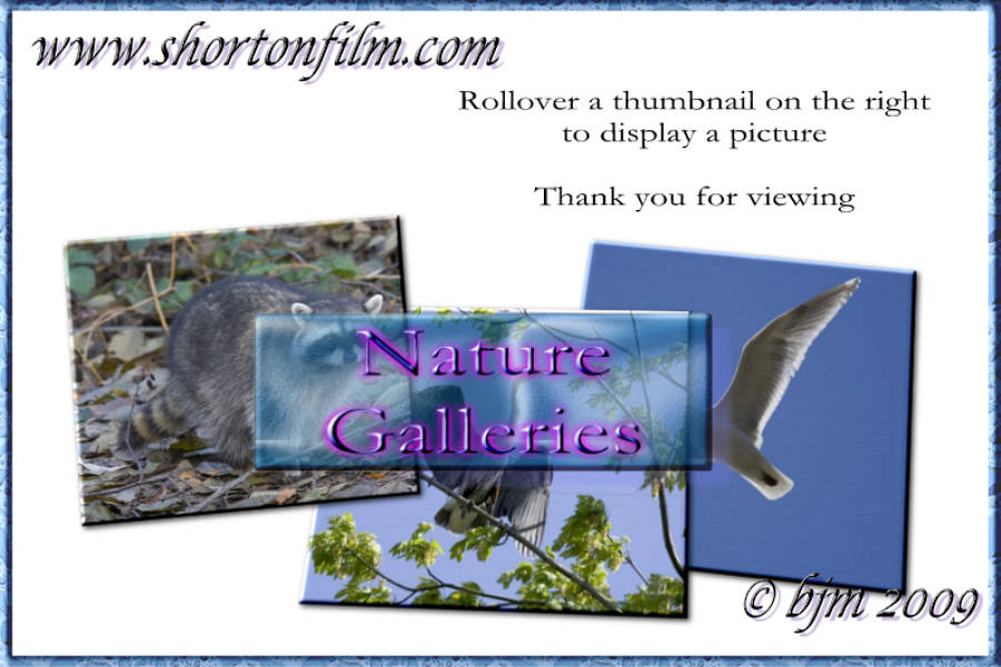 rollover a thumbnail on the right